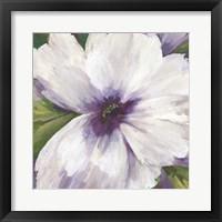 Framed Violet Orchid II