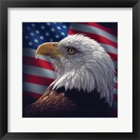 Framed American Bald Eagle