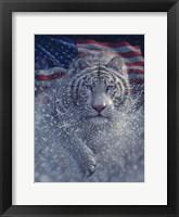 Framed White Tiger America