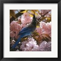 Framed Steller's Blossoms