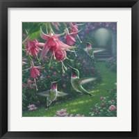 Framed Hummingbird Haven - Square