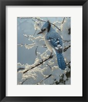 Framed Blue Jay - On the Fence