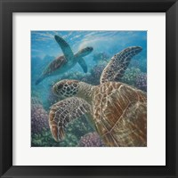 Framed Sea Turtles - Turtle Bay - Square