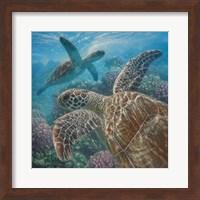 Framed Sea Turtles - Turtle Bay - Square