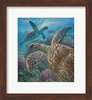 Framed Sea Turtles - Turtle Bay