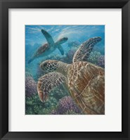 Framed Sea Turtles - Turtle Bay