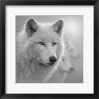 Framed Arctic Wolves - Whiteout - B&W