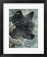 Framed Black Wolf - Black in White