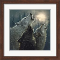 Framed Howling Wolves - In Harmony