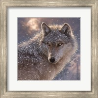 Framed Lone Wolf - Square