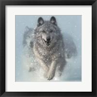 Framed Running Wolves - Snow Plow - Square