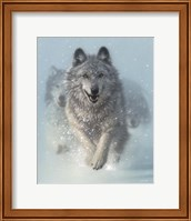 Framed Running Wolves - Snow Plow