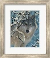 Framed Wolf - Broken Silence