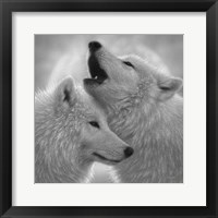 Framed Wolves - Love Song - B&W