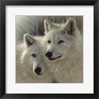 Framed Wolves - Sunlit Soulmates