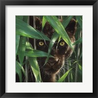 Framed Black Panther - Wild Eyes