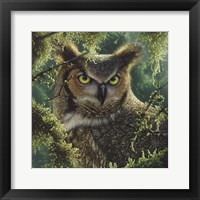 Framed Great Horned Owl - Watching and Waiting