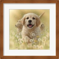 Framed Golden Retriever Puppy - Dandelions - Square