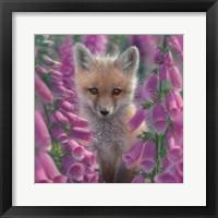 Framed Red Fox - Foxgloves - Square