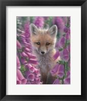 Framed Red Fox - Foxgloves