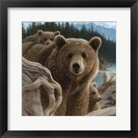 Framed Brown Bears - Backpacking - Square