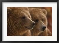 Framed Brown Bears - Lazy Daze