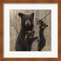 Framed Black Bear Mother and Cubs - Mama Bear