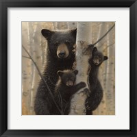 Framed Black Bear Mother and Cubs - Mama Bear