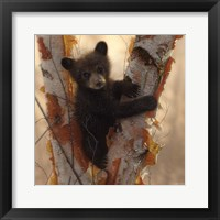 Framed Curious Cub I