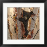 Framed Curious Cub II