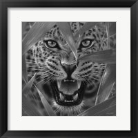 Framed Jaguar - Ambush - B&W