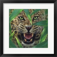 Framed Jaguar - Ambush