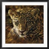 Framed Jaguar Cub on Bark