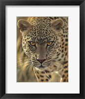 Framed Leopard - On the Prowl