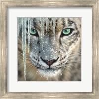 Framed Snow Leopard - Blue Ice