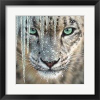 Framed Snow Leopard - Blue Ice