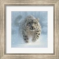 Framed Snow Leopard - Snow Ghost