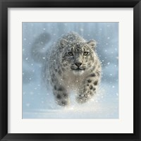 Framed Snow Leopard - Snow Ghost