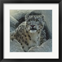 Framed Snow Leopard - The Fortress