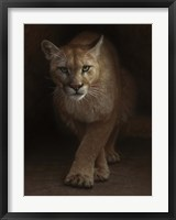 Framed Cougar - Emergence
