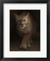 Framed Cougar - Emergence
