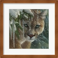 Framed Cougar - Frozen