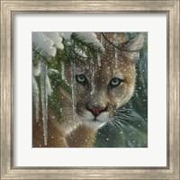 Framed Cougar - Frozen