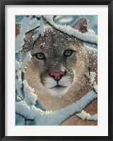 Framed Cougar - Silent Encounter