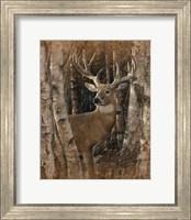 Framed Whitetail Deer - Birchwood Buck