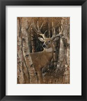Framed Whitetail Deer - Birchwood Buck