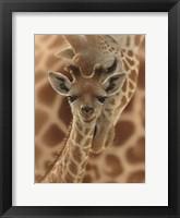 Framed Newborn Giraffe