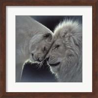 Framed White Lion Love