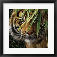 Framed Tiger - Emerald Forest