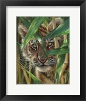 Framed Tiger Cub - Peekaboo
